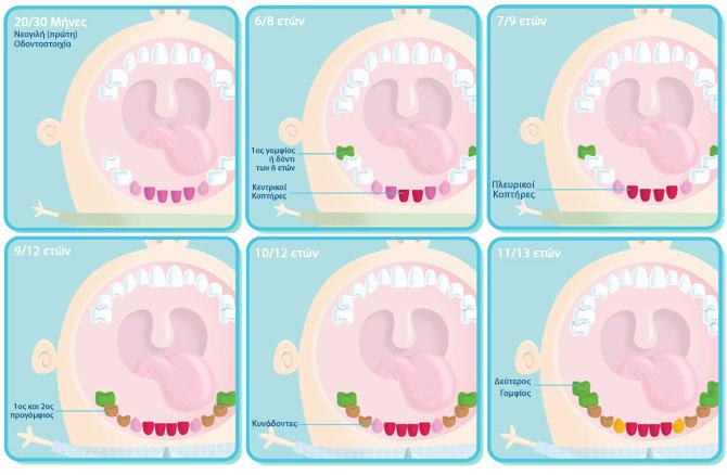 Πότε εμφανίζονται τα μόνιμα δόντια στο στόμα;